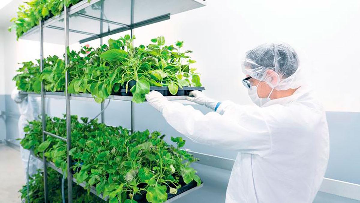 Quer testar vacina à base de plantas contra covid-19? Veja como se candidatar